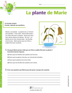 La plante de Marie