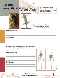 Fossiles, adaptations et évolution