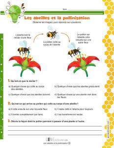 Les abeilles et la pollinisation